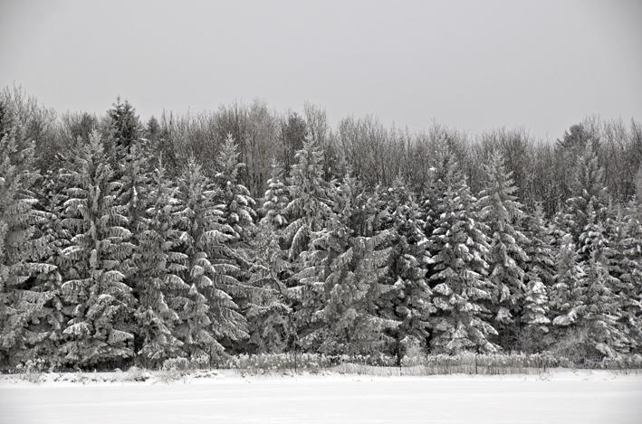 75 Winter.jpg