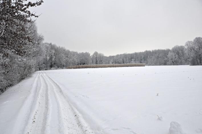 80 Winter.jpg